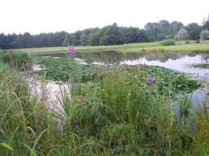 Il Giardino d'acqua del Boscoincittà