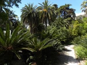 6_La ricca vegetazione dei giardini Hanbury - Ventimiglia