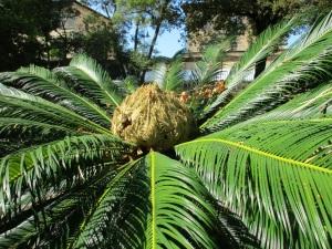 Verdi piante dell'Orto